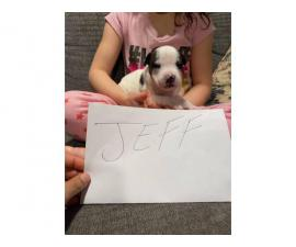 6 Pitbull pups in need of good homes