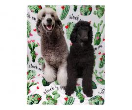 Males and female Standard Poodle puppies for sale
