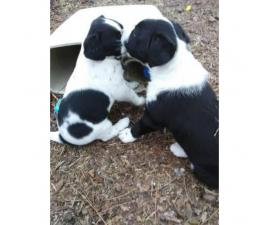 6 adorable mixed breed puppies