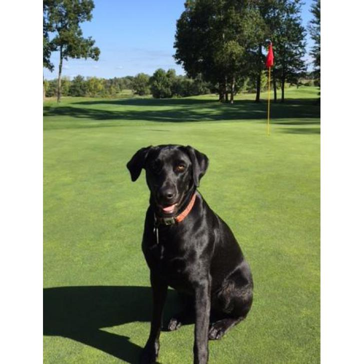 For Sale By Owner Colorado >> AKC Registered Black Lab Puppies $750 in Southfield, Michigan - Puppies for Sale Near Me