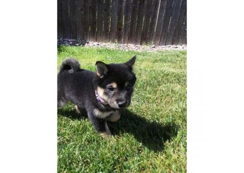 Colorado - Puppies for Sale Near Me