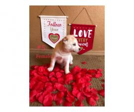 Cute Husky Puppies for rehoming