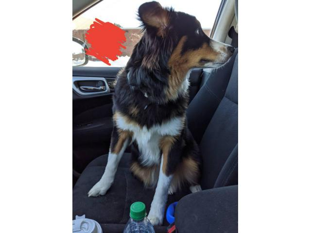 Rescue Border Collies For Rehoming In Hartford Connecticut Puppies For Sale Near Me